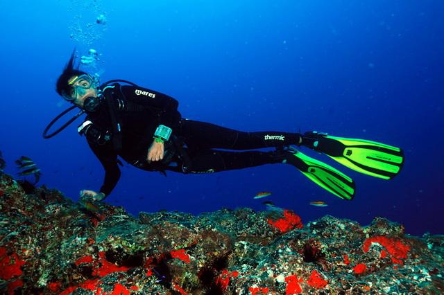 Лучший дайвинг на острове Тенерифе